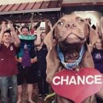 SPCA usa música do Abba para campanha de adoção
