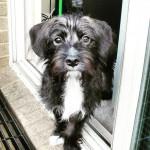 6 coisas para analisar antes de adotar um cão