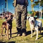 ONG busca voluntários para passearem com cães