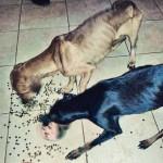 Cães são deixados sem água e comida em apartamento