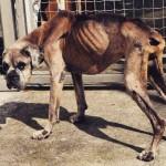 Cão definha após a morte do dono
