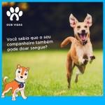 Faculdade promove doação de sangue canino