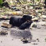Cão que tira garrafas do Tietê é fêmea e tem dono