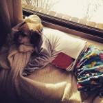 22 fotografias de cachorros de pijamas
