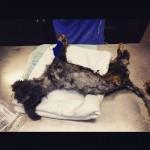 Cadela encontrada quase morta no lixo é resgatada