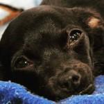 Cadela que teve pele arrancada precisa de ajuda