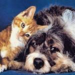 Brasileiros têm 74 milhões de cães e gatos em casa