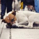 O que fazer ao encontrar um cão de rua