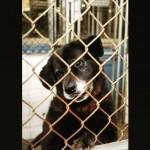 Cães esperam até 7 anos por adoção em CCZ de SP
