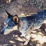 Vera Cruz volta a registrar envenenamento de animais