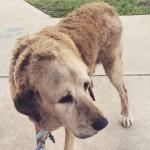Cão de 20 anos que foi abandonado é adotado