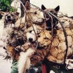 Abaixo-assinado contra o festival de carne canina