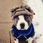 O inverno chegou. Cuidados com o seu cão