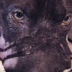 Cadela que teve focinho amarrado se recupera