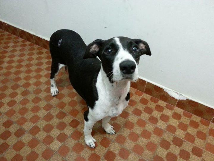 cachorros-resgatados-casa-03