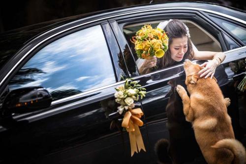 fotografia-allen-ko-casamento-noiva-cachorro-despedida-500x333