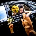 Foto de noiva se despedindo de cão ganha prêmio