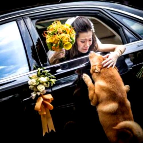 fotografia-allen-ko-casamento-noiva-cachorro-despedida-500x333lll