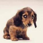 Como fazer denúncia de maus-tratos aos animais?