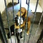 Cadelas que seriam sacrificadas são adotadas