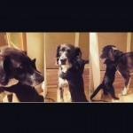 Gato faz festa ao rever cão após 10 dias