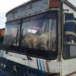 Desabrigado por enchente salva mais de 100 cães