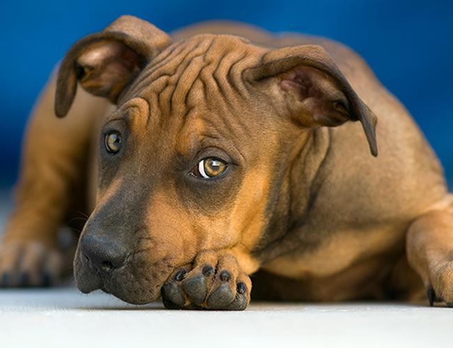 Nanette-Martin-cachorro