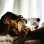 Por que os cachorros ficam felizes quando você chega em casa?