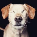 Fotógrafo retrata a beleza de cães deficientes