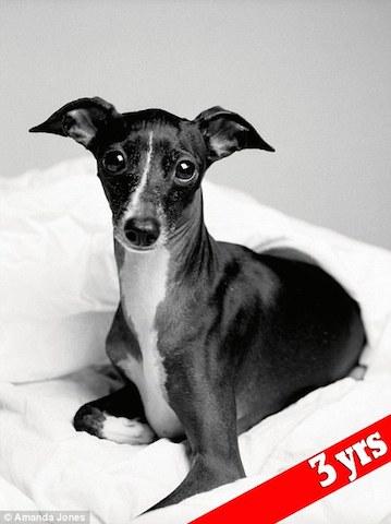 cachorro-audrey-antes