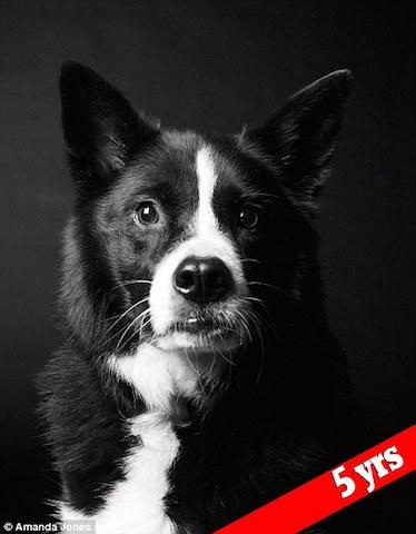 cachorro-maddy-antes