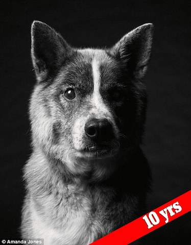 cachorro-maddy-depois