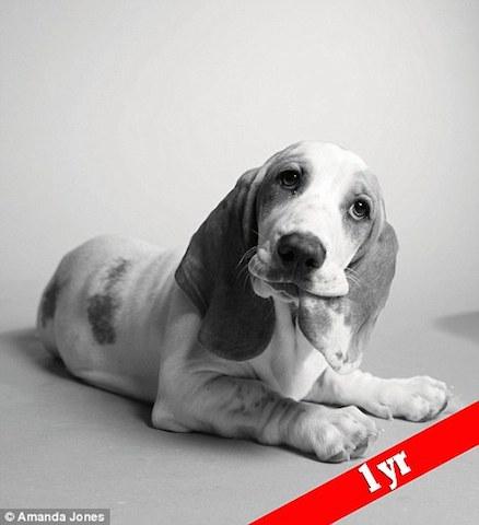 cachorro-poppy-antes