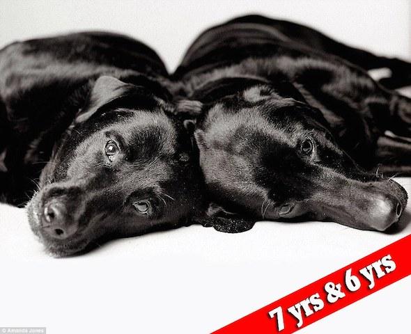 cachorros-maddie-e-elle-antes
