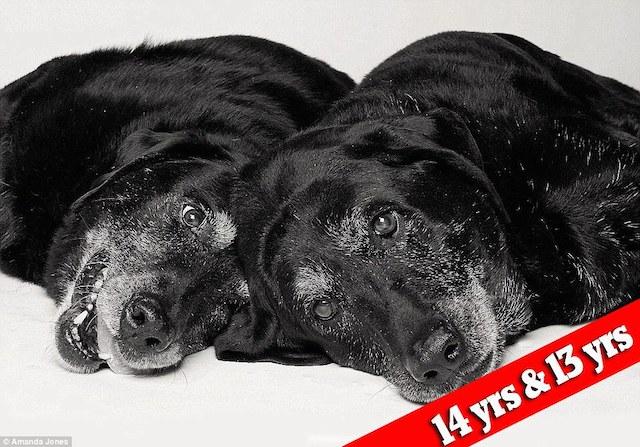 cachorros-maddie-e-elle-depois