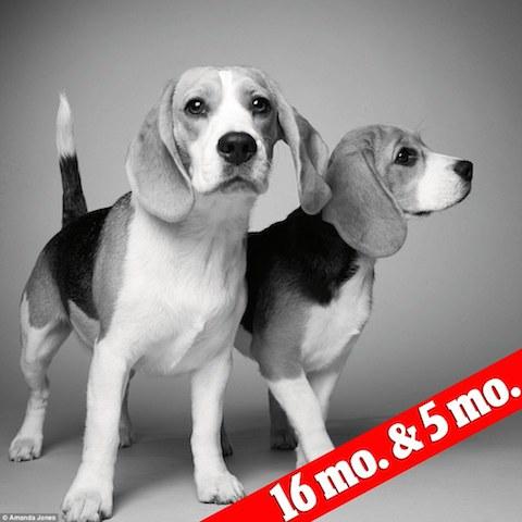 cachorros-sidney-e-savannah-antes