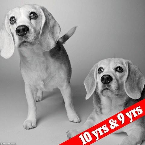 cachorros-sidney-e-savannah-depois
