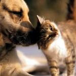 Estudo sugere que gatos são superiores a cães