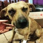 Testemunha diz que lutador riu após espancar cão