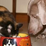 Comida de gato para cão e de cão para gato
