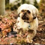O agradecimento de cães matrizes