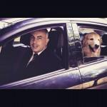 Em ação, Uber leva cães para adoção