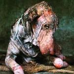 Cão encontrado doente passa por transformação