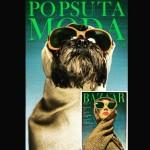 Cães para adoção recriam capas de revistas