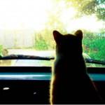 Dicas para sair de carro com seu gato