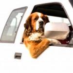 Como levar o seu cão para viajar