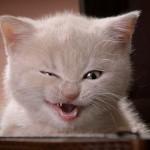 7 fatos sobre gatos que você não sabe