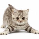 Conheça os cuidados básicos de um gato