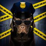 FBI trata maus-tratos de animais como crime grave