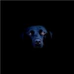 Por que cães pretos são discriminados?